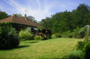 Zakładamy piękny trawnik