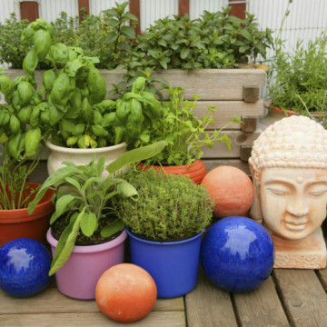 Własny ogródek ziołowy