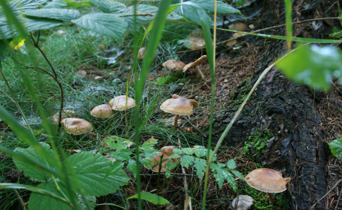 Fotografowanie grzybów