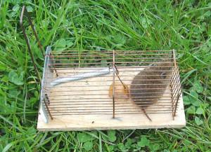 Przeganiamy szkodniki z ogrodu