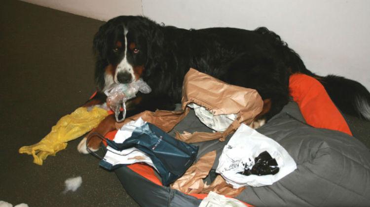 życie z psem, pielęgnacja