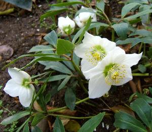 Zimowe kwiaty