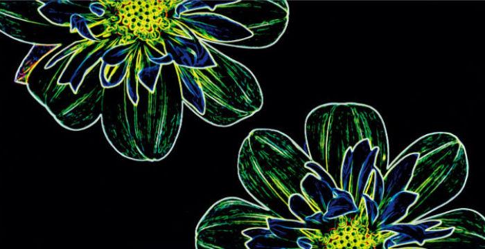 Fluorescent Flower_Opoczno_6