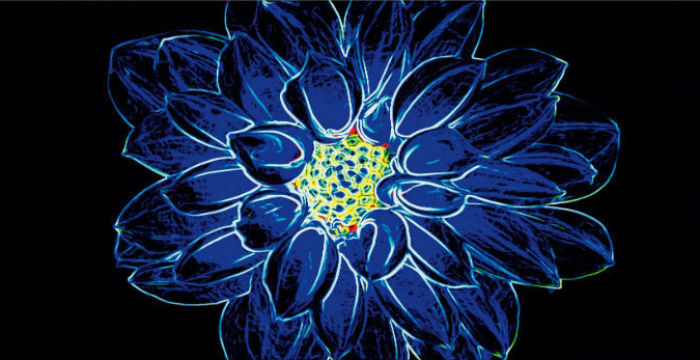 Fluorescent Flower_Opoczno_9