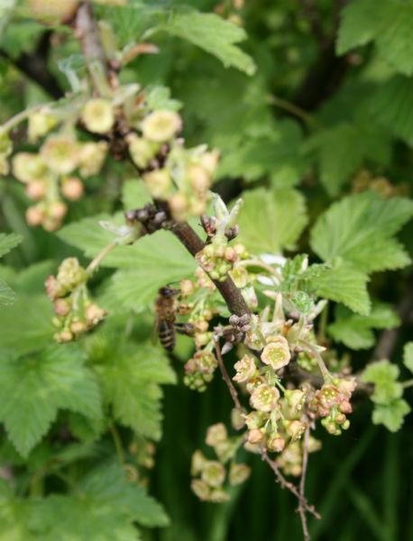 Ratunek dla dzikich pszczół