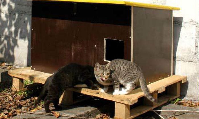 schronienie na zimę dla kotów