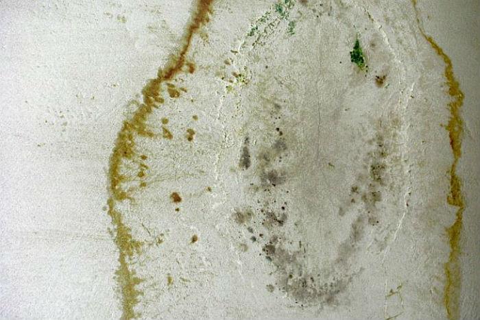 Groźny grzyb - zwalczanie i zapobieganie