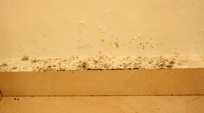 groźny grzyb - usuwanie i zapobieganie