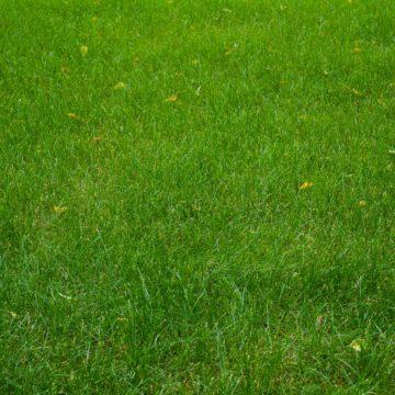 jak-przygotowac-trawnik-do-zimy