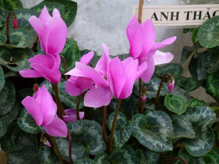 Najladniejsze I Najbardziej Pachnace Kwiaty Doniczkowe Do Mieszkania Hobby Dom