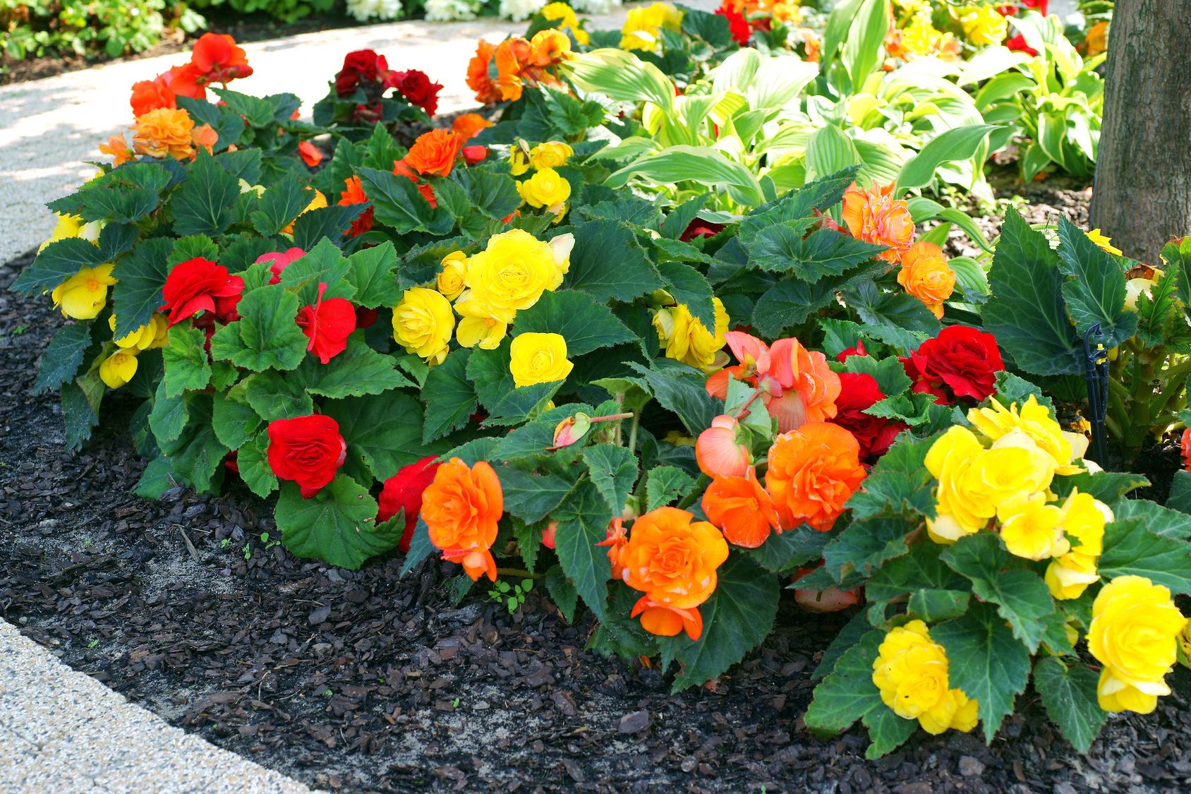 Najpiekniejsze Kwiaty Ktore Musza Znalezc Sie W Kazdym Ogrodzie