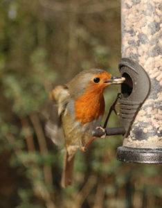 Dokarmianie ptaków wokół domu