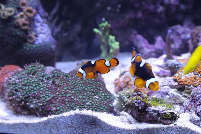 rybki w domowym zbiorniku wodnym
