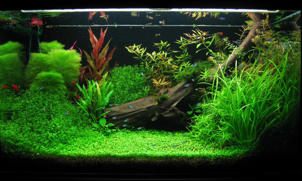 Rośliny akwariowe a CO2