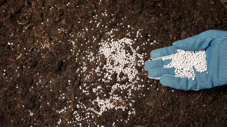 Rodzaje nawozów ogrodniczych i ich zastosowanie