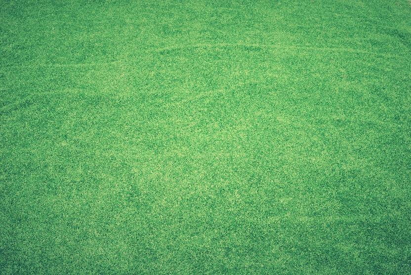 Czy prawidłowo nawadniasz swój trawnik? Sprawdź