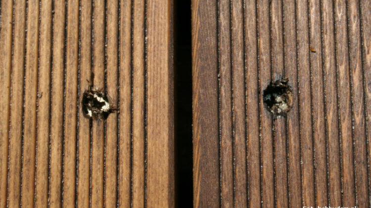 Poprawne osadzanie wkrętów w drewnie