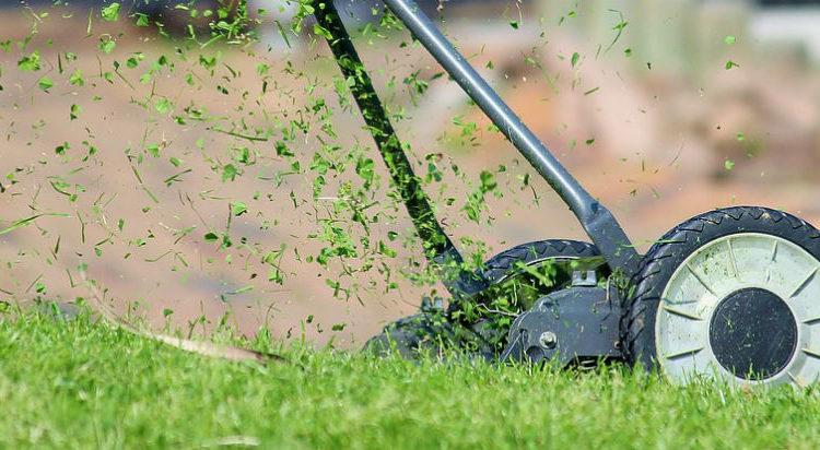 Piękny i zadbany trawnik