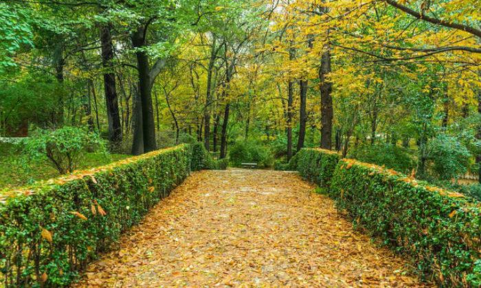 ogród jessienią